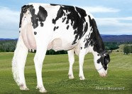 Lesperron Shottle Splenda EX-91-12*